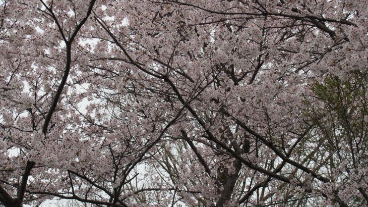 保護中: 2019年4月27日 東北リーグ第1戦 vs明桜高校